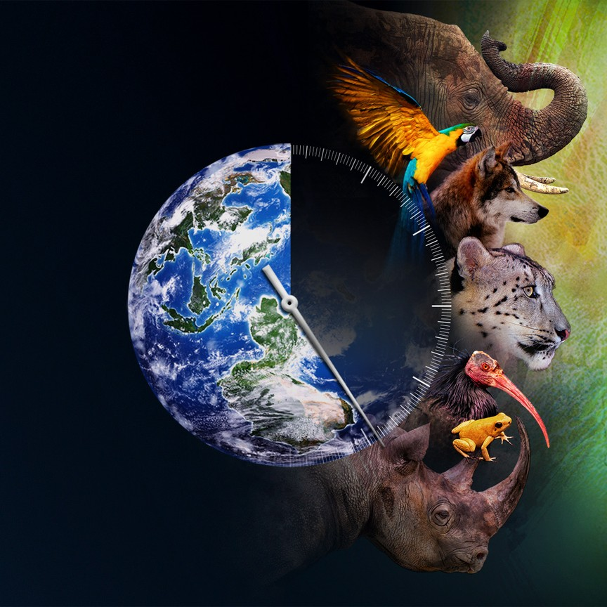 Racing Extinction graphic